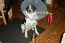 DIY-Dog-Martini-Costume