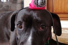 DIY-Dog-Party-Hat