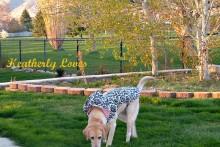 DIY-Dog-Raincoat