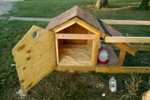 DIY-Doghouse-Chicken-Coop