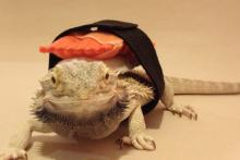 DIY-Dragon-Sushi-Costume1