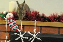 DIY-Edible-Snowflake-Decorations