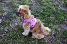 DIY-Fabric-Dog-Harness