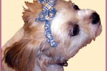DIY-Fabric-Dog-Headband1