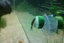 DIY-Fish-Vegetable-Feeder