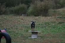 DIY-Goat-Playground
