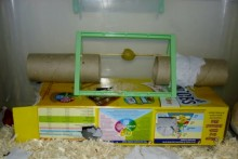 DIY-Hamster-Foraging-Toy