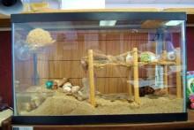 DIY-Hermit-Crab-Boardwalk