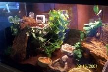 DIY-Hermit-Crab-Moss-Pit