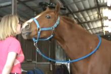 DIY-Horse-Kiss-Trick