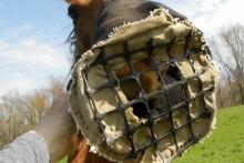 DIY-Horse-Muzzle