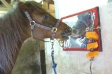 DIY-Horse-Stall-Entertainment1