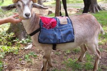 DIY-Jeans-Goat-Soft-Pack1