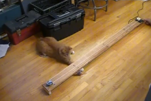 DIY-Mouse-Chase-Cat-Toy