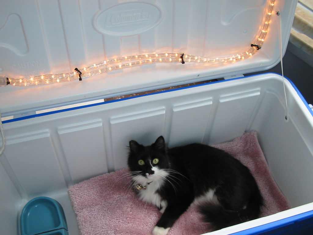 DIY Outdoor Cat House - petdiys.com