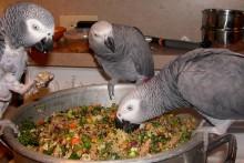 DIY-Parrot-Chop