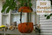 DIY-Pumpkin-Bird-Feeder