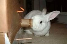 DIY-Rabbit-Activity-Station
