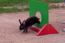 DIY-Rabbit-Window-Jump