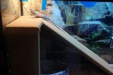 DIY-Reptile-Ramp-Platform