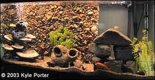 Diy Rock Aquarium Background Petdiys Com