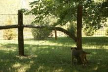 DIY-Rustic-Fence