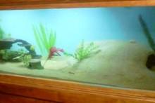 DIY-Sand-Cement-Aquarium-Cave