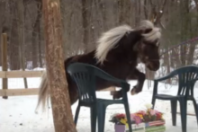 DIY-Scary-Object-Horse-Training