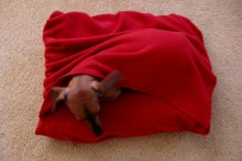 DIY-Snuggle-Dog-Bed