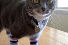 DIY-Sock-Cat-Leg-Warmers