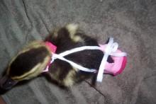 DIY-Sock-Duck-Diaper