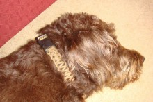 DIY-String-Dog-Collar