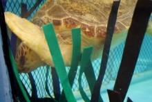 DIY-Turtle-Carwash-Forrest