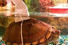 DIY-Turtle-Shark-Costume