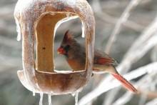 DIY-Winter-Bird-Feeding