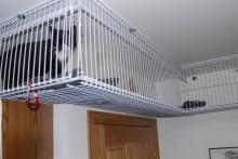 DIY-Wire-Shelves-Catwalk