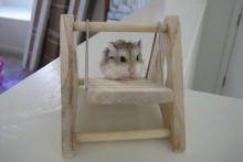 DIY-Wood-Hamster-Swing