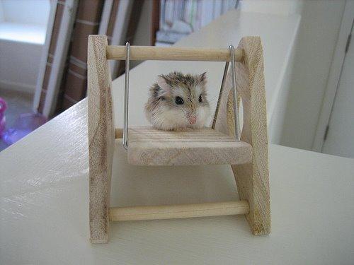Pet Rat Diy