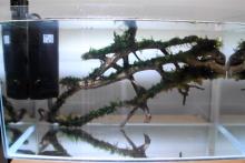 DIY-Wood-Moss-Wall