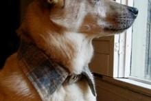Fabric-Collar-Dog-Collar