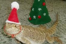 Fabric-Reptile-Santa-Hat