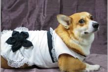 Fabric-T-shirt-Dog-Dress
