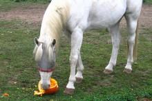 Fruit-Pumpkin-Horse-Treat-Toy