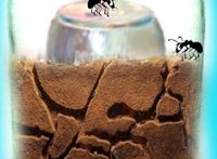 Jar-Ant-Farm