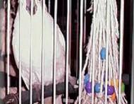 Mop-Bird-Toy1