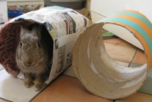 Newspaper-Bunny-Tunnel