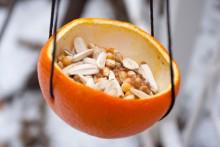Orange-Peel-Bird-Feeder