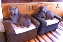 Ottoman-Dog-Bed