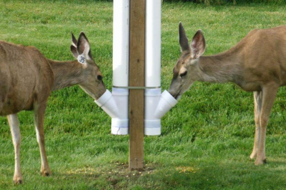 Pvc Deer Feeder Petdiys Com