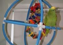 PVC-Parrot-Swing